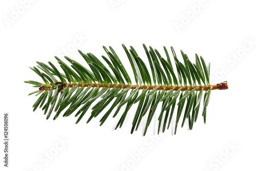 Fotomural fir tree branch isolated on white