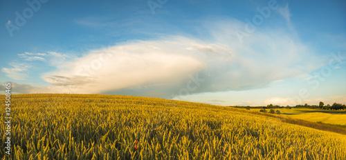 Foto auf Gartenposter Landschappen rural landscape, field, grain