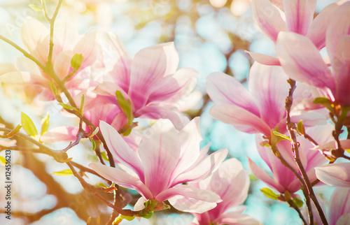 Poster Magnolia Magnolie
