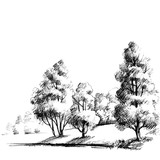 Forest sketch. Beautiful garden hand drawing - 124518001