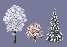 Winter Trees And Bush
