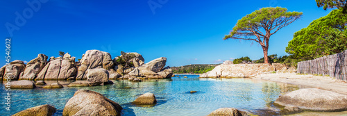 Aluminium Prints Beach Famous pine tree and the lagoon on the Palombaggia beach, Corsica, France, Europe.