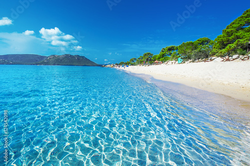 Photo  Sandy beach with pine trees and azure clear water, Corsica, France, Europe
