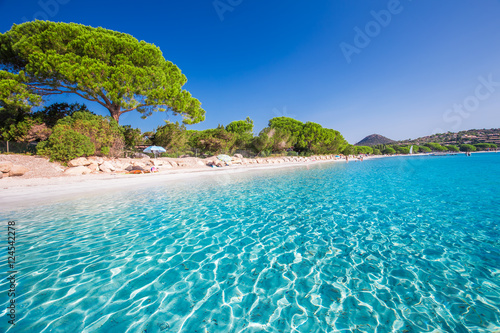 Poster de jardin Plage Santa Gulia sandy beach with pine trees and azure clear water, Corsica, France, Europe