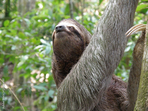 An Amazing Look at the Sloth