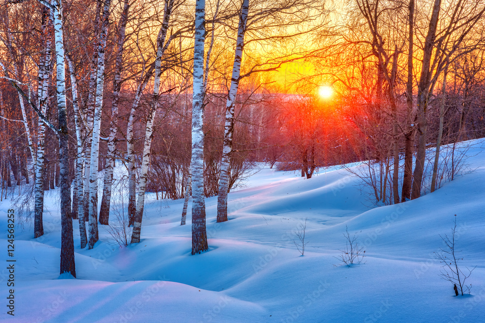 Fototapeta Colorful sunset in winter forest