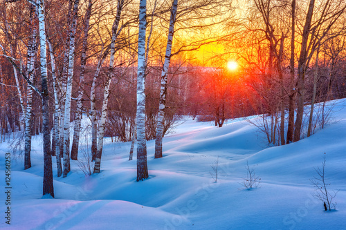 Obraz Colorful sunset in winter forest - fototapety do salonu