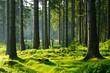 canvas print picture - Unberührter naturnaher Fichtenwald im warmen Licht der Morgensonne