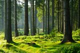 Fototapeta Las - Unberührter naturnaher Fichtenwald im warmen Licht der Morgensonne