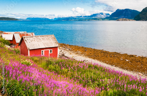 Garden Poster Scandinavia Norway fjord landscape with tipical houses