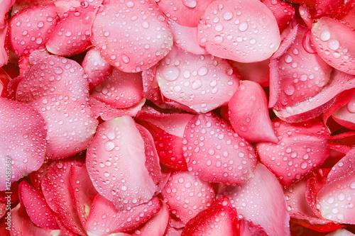 swieze-czerwone-tlo-platek-rozy-z-kropli-deszczu-wody