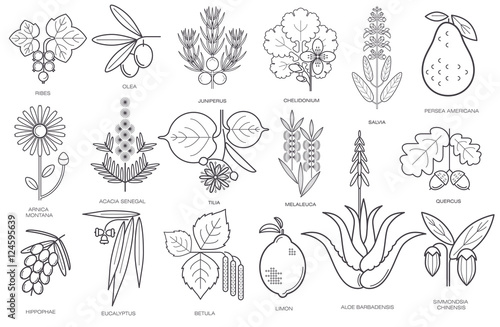Collection of simple images of medical plants Canvas-taulu