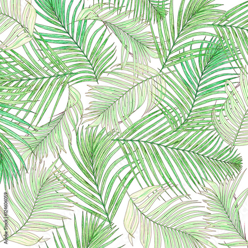 Ingelijste posters Tropische Bladeren Green leaves of palm tree isolated on white background