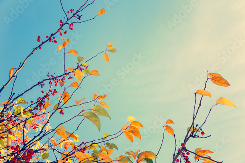Obraz Colorful fall tree leafs against sky, vintage background  - fototapety do salonu