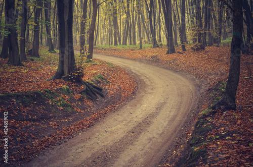 Keuken foto achterwand Bossen Forest road with beech trees on early autumn day