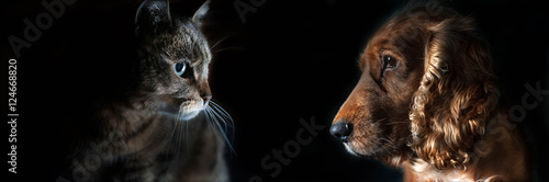 Tuinposter Hond cat and dog