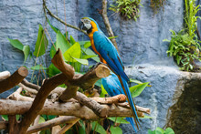 Macaw Parrot,Macaw, Parrot.