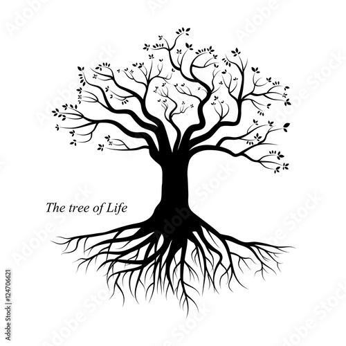 Fotografía  Tree of Life