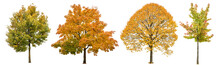Autumn Trees Isolated White Background. Oak, Maple, Linden
