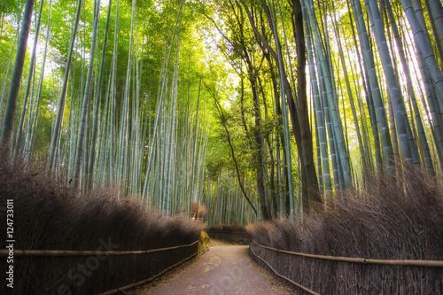 Foto op Plexiglas Bamboe Path to bamboo forest, Arashiyama, Kyoto, Japan. Vibrant morning.