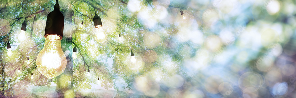Fototapeta The Bulb Tree Panorama