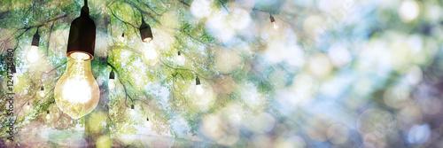 Fototapeta The Bulb Tree Panorama obraz
