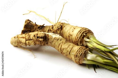 Fotografie, Obraz  Armoracia rusticana Horseradish Rafano Meerrettich Cren Peberrod Rábano Raifort