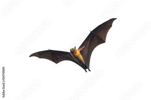 Recess Fitting Dragons Bat flying on white background