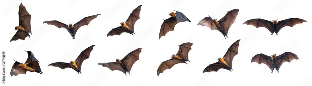 Fototapety, obrazy: Bats flying on white background