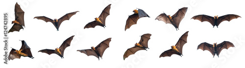 Billede på lærred Bats flying on white background