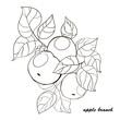 Hand-drawn apple tree branch with fruits and leaves.