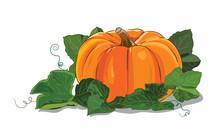 Pumpkin. A Big Ripe Pumpkin Green Pumpkin Leaves