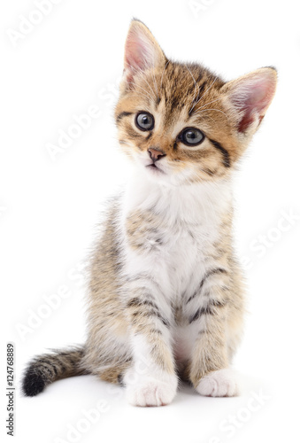 Kitten on white background. Wallpaper Mural