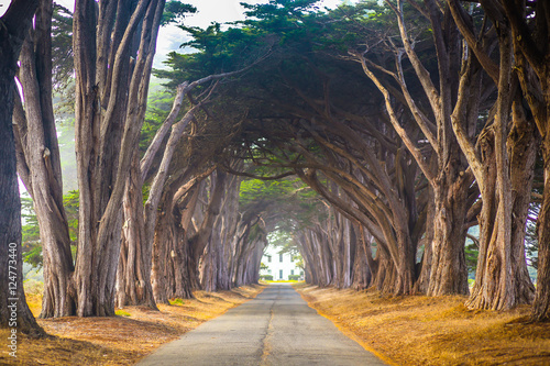 Point Reyes Cyress Tree Tunnel