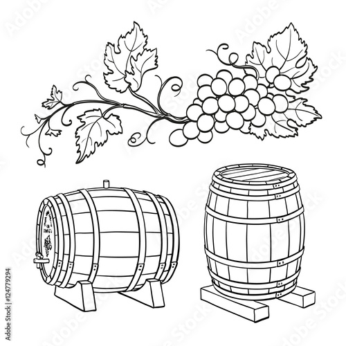 grape branches and wine barrels buy this stock vector and explore Parts of a Grape grape branches and wine barrels