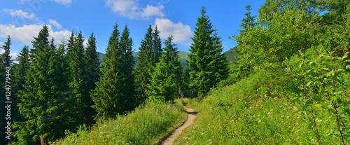 Poster de jardin Route dans la forêt Forest path