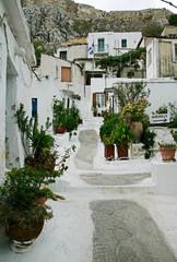 white-wash walkway w plants