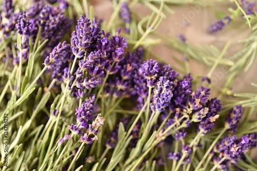 Spoed Foto op Canvas Lavendel lavande