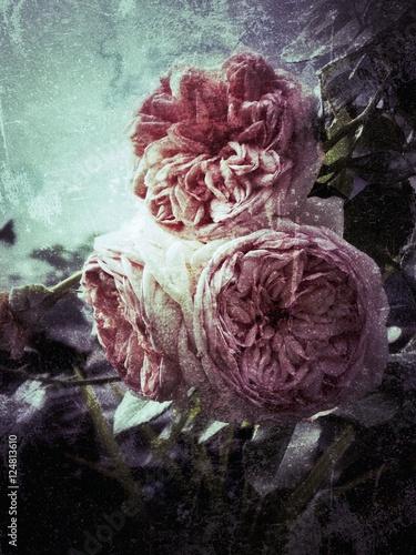 piekny-roza-kwiat-na-rocznika-tle