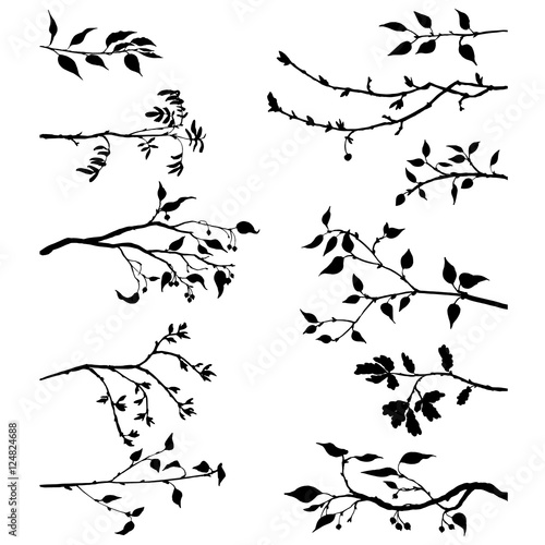 set of tree branches with leaves and berries Wall mural