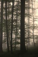 Silhouetten in nebligem Laubwald
