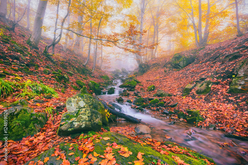 Foto op Canvas Lavendel Autumn foggy forest stream in the mountain canyon, nature colorful landscape, suitable for wallpaper