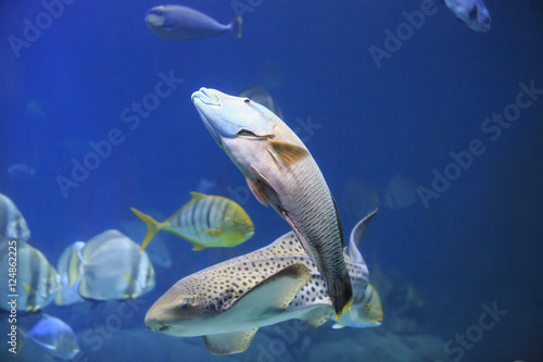 Tropical Fish - Buy this stock photo and explore similar images at