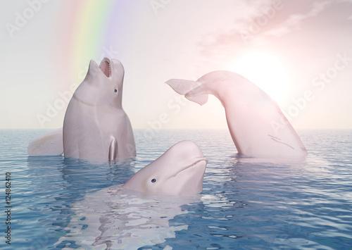 Fotografija Beluga Wale