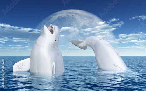 Beluga whales in front of the moon Canvas Print