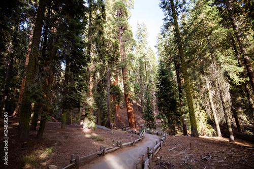 Keuken foto achterwand Verenigde Staten Giant Forest Sequoia National Park
