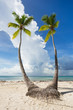 Twins Palm Trees, Saona Island in Punta Cana, Dominican Republic