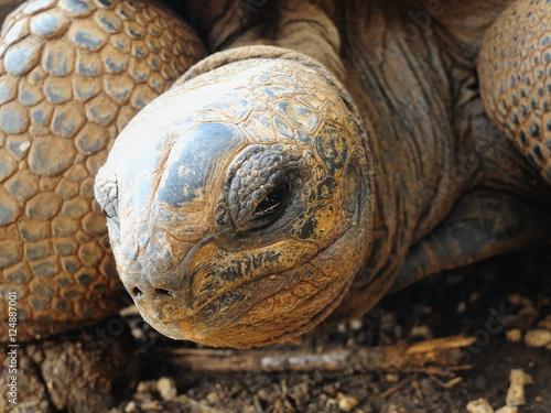 Fotografie, Obraz  Big Aldabra tortoise eye detail in Mauritius.