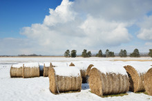 Straw Bales In The Winter Field