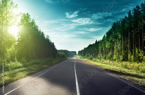 droga-w-slonecznym-lesie